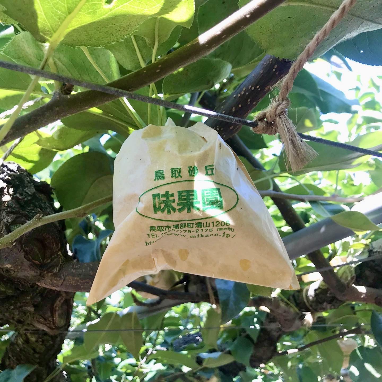 梨の生産地- 鳥取県